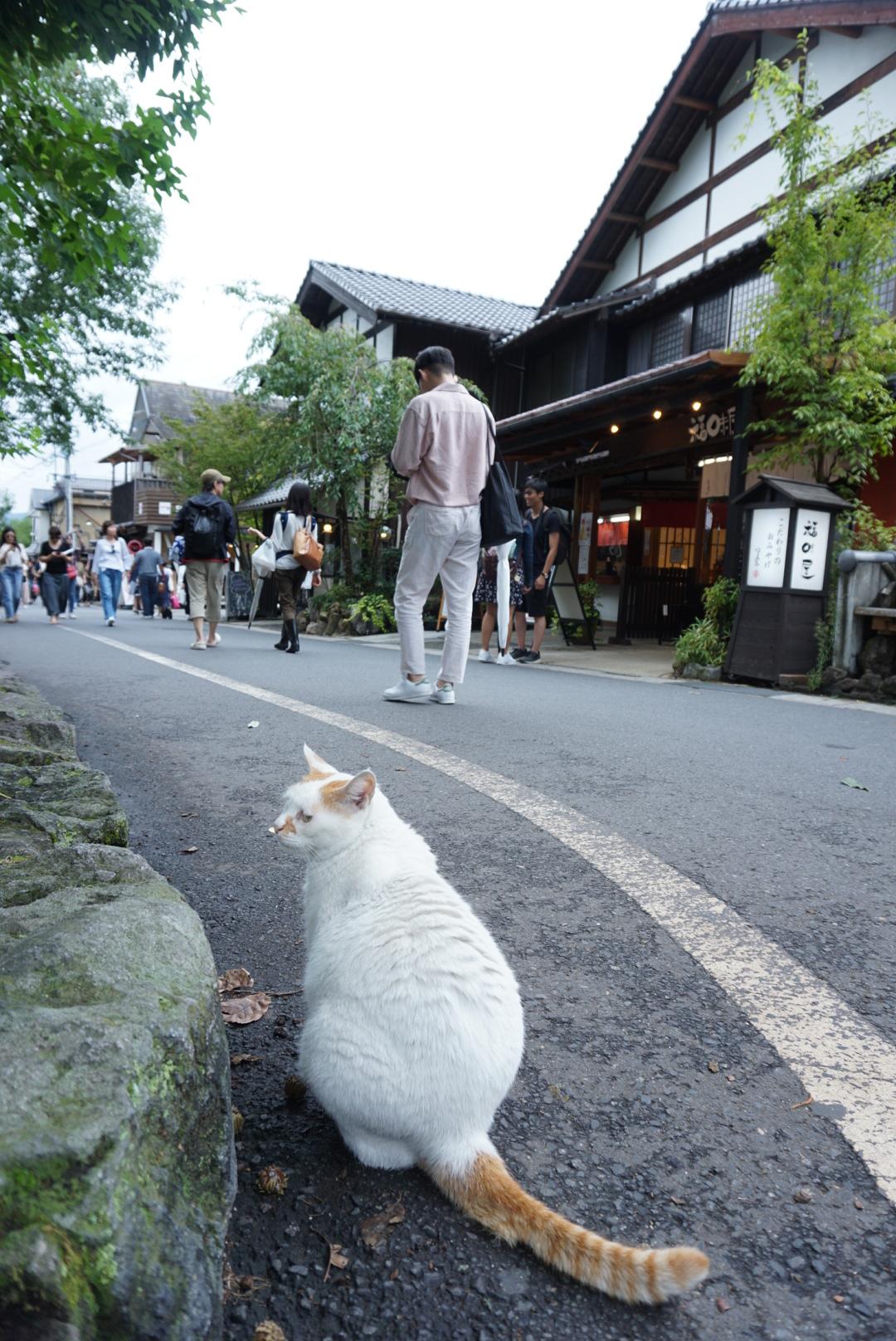 湯布院のお店通りの猫